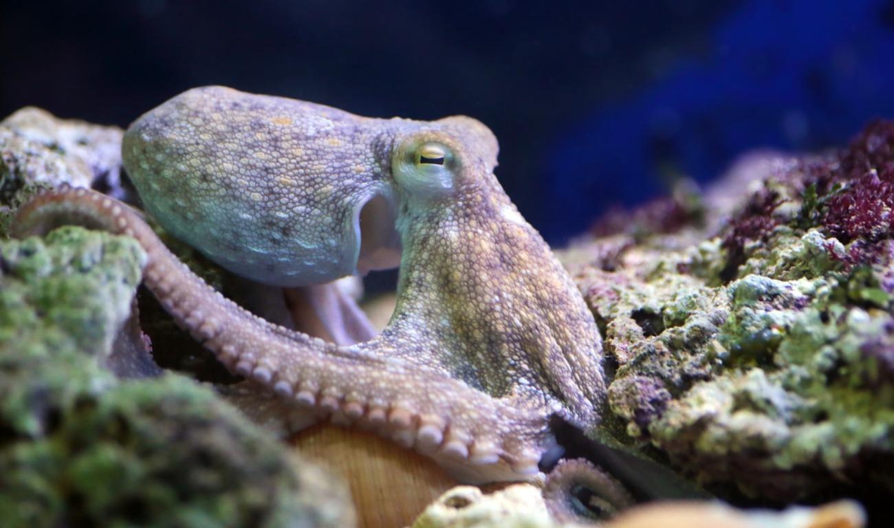 Sea Life Hanover Thailand Et Ticket Ocean World Aquarium Only Child Top 5 Creatures Of